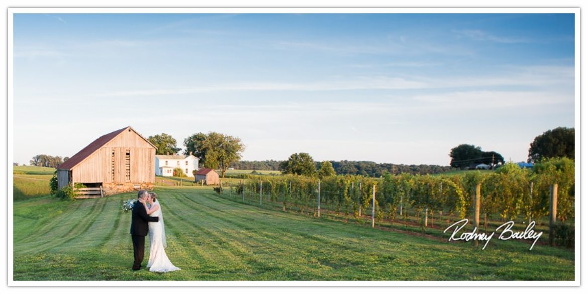 Northern Virginia Winery Wedding